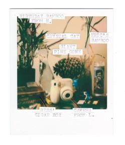 Joshua Preston Polaroid - Curios 1