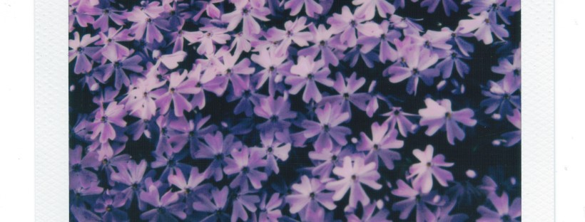 Minneapolis Minnesota Flower Polaroid by Joshua Preston